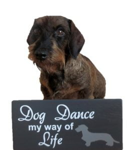Teckel met bordje Dogdance my way of life