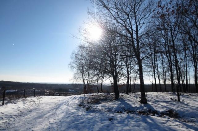 Besneeuwd pad tijdens de wandeling Veluwezoom-Posbank
