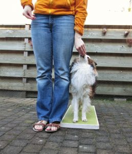 Dogdance met jonge Sheltie oefenen