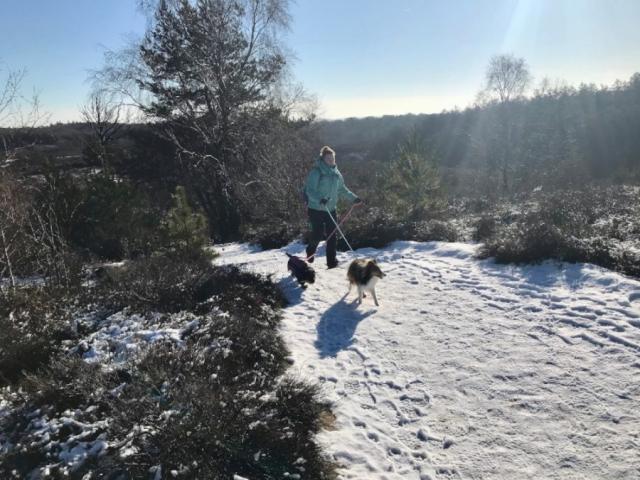 Wandelen met de honden in de sneeuw bij de Besneeuwd pad bij de Veluwezoom-Posbank