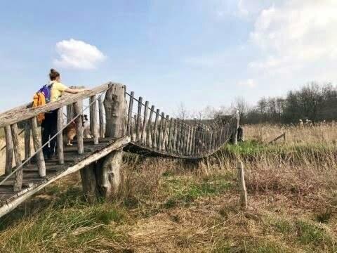 Samen met de hond de hangbrug over in natuurgebied de Plateaux-Hageven