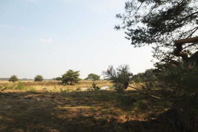 Wandelen met de Japanse krulstaarten in De Plateaux - Hageven
