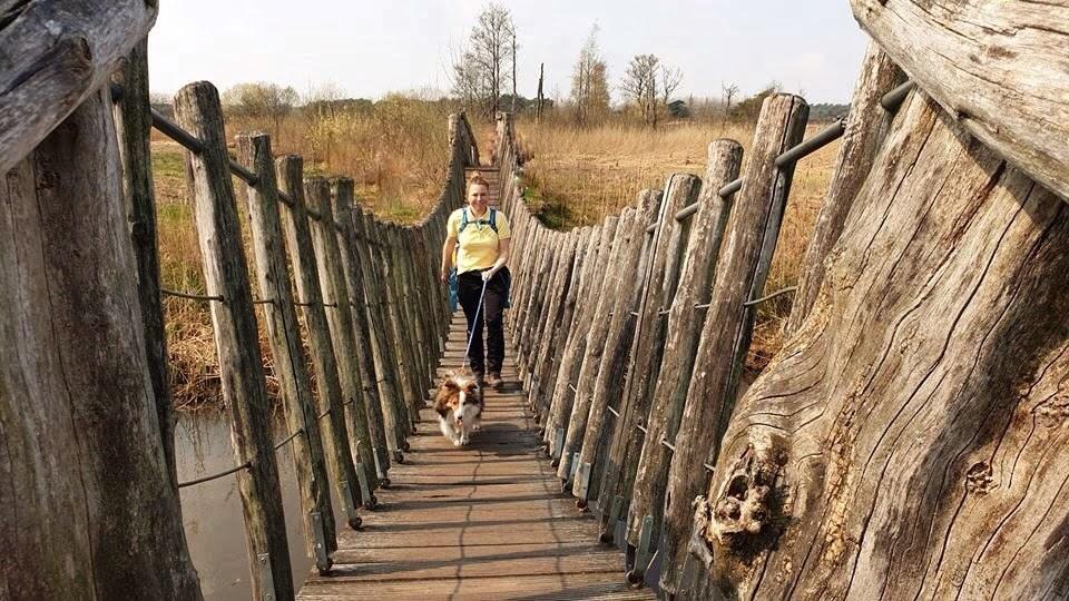 Samen met de hond de hangbrug over tijdens de wandeling met de Japanse krulstaarten