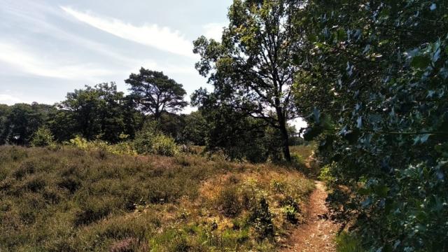 Wandelpaadje Oudemolense Diep