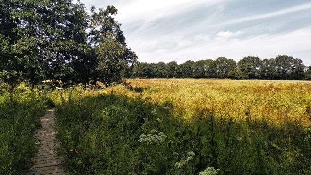 Natuur bij Oudemolense Diep