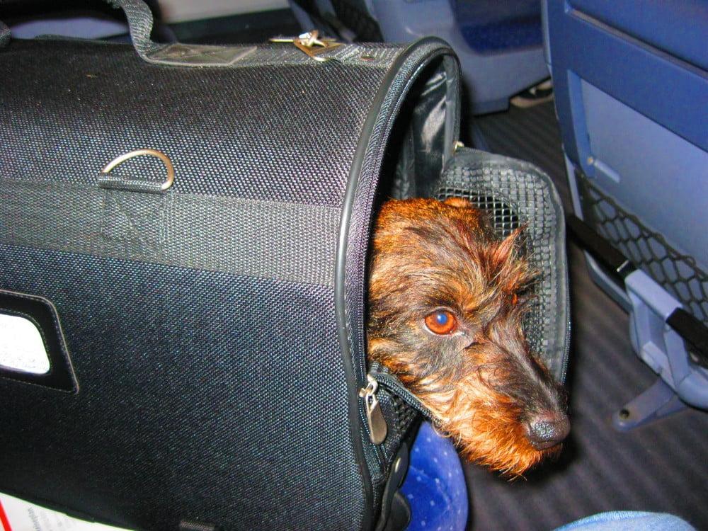 Met de hond in de trein naar Oostenrijk