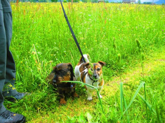Honden mee vakantie naar Oostenrijk