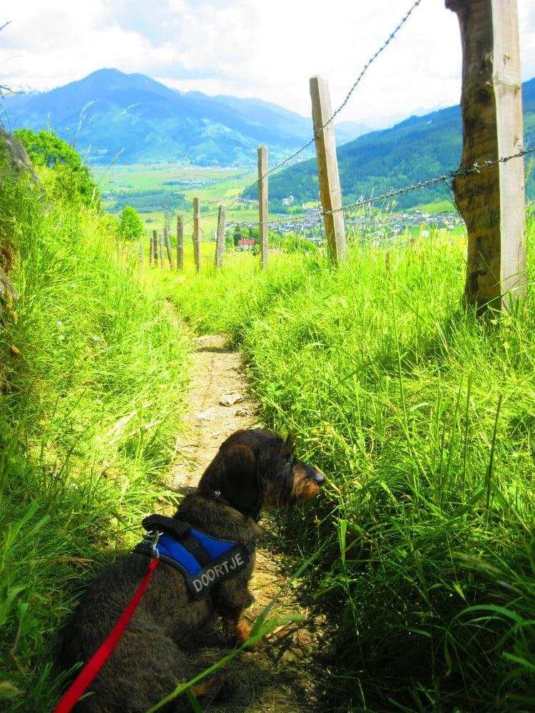 Met de hond op vakantie in Oostenrijk