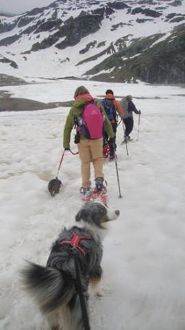 Met de honden wandelen in de Oostenrijkse sneeuw