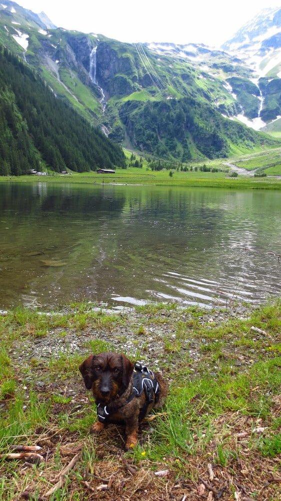 Met de hond bij de Hintersee in Oostenrijk