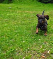 Blije hond op vakantie in Oostenrijk