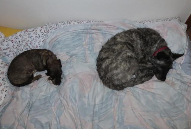 Slapende honden in Oostenrijk