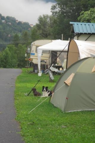 Honden bij de tent in Frankrijk