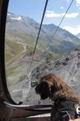 Hond zit in de gondel naar grote hoogte