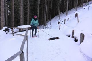 Teckel ruikt wild in de sneeuw