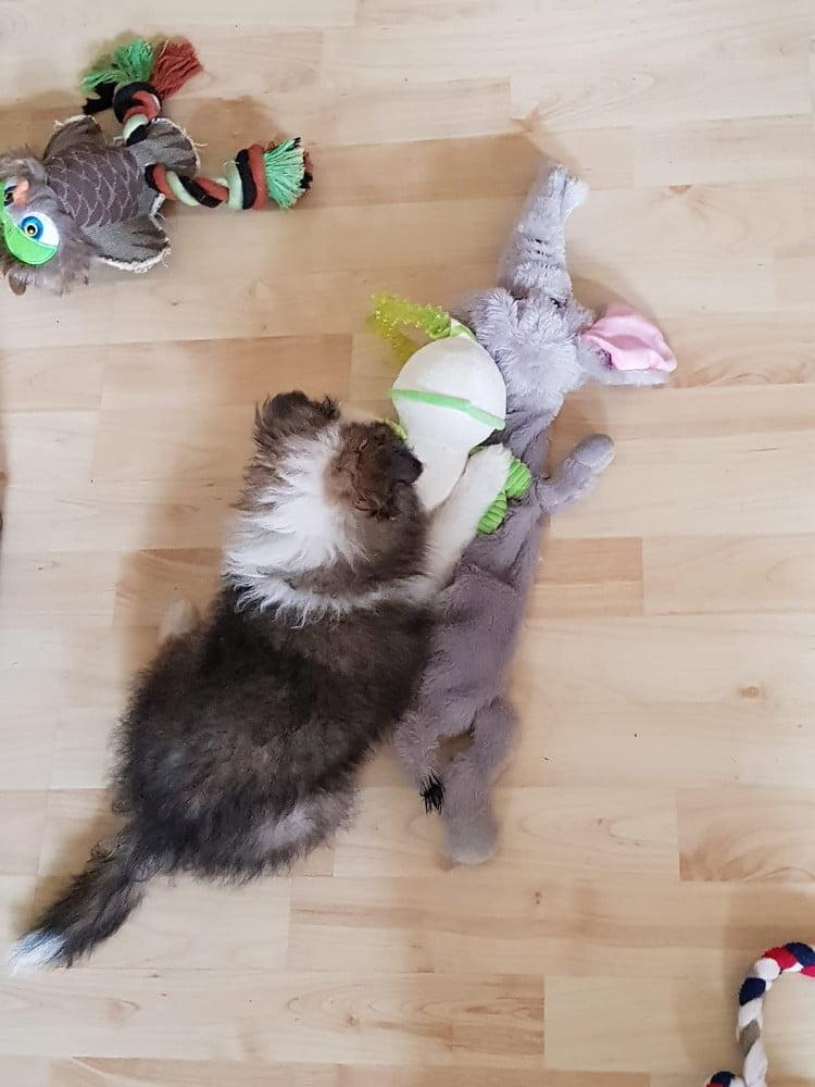 Pup vindt speeltjes leuk