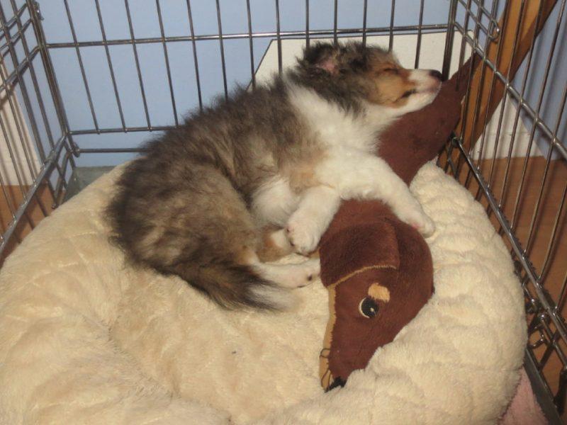 Puppy slaapt van onzeker naar vertrouwen