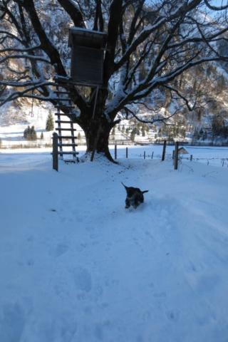 Blije hond in de sneeuw