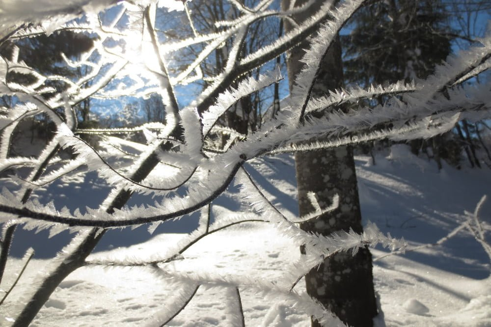 Sneeuw op takken
