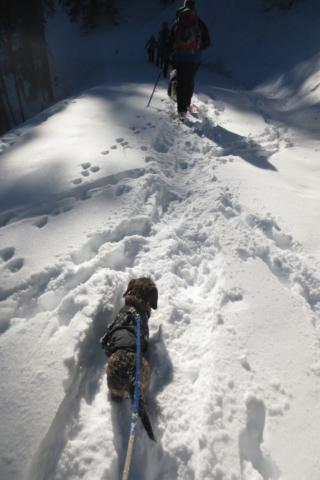 Teckel in de Oostenrijkse sneeuw