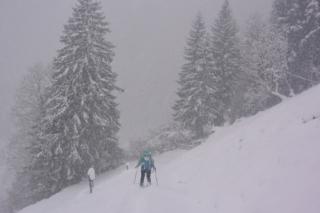 Sneeuwschoenwandelen in Oostenrijk met de hond