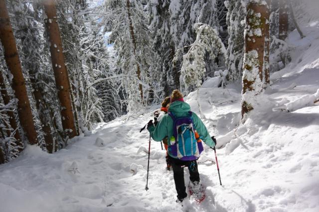 Wandelen met de honden door de diepe sneeuw