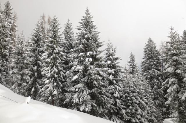 Sneeuw op de bomen in Oostenrijk