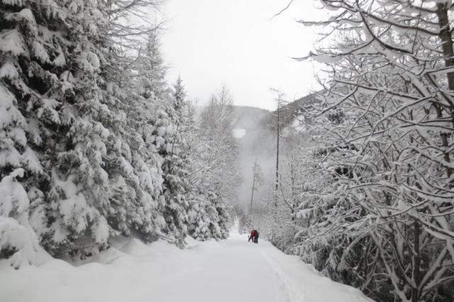 Alles bedekt onder een dikke laag sneeuw in Oostenrijk