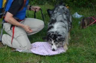 Schatzoeken met de hond