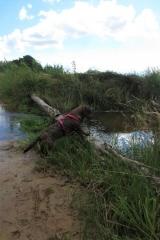Hond staat met voorpootjes op een boomstam