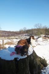 Twee honden zitten op boomstam in natuurgebied Natuurgebied Veluwezoom-Posbank