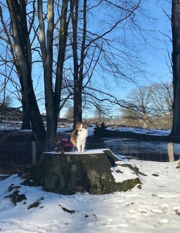 Twee honden op een boomstam bij de Veluwezoom-Posbank