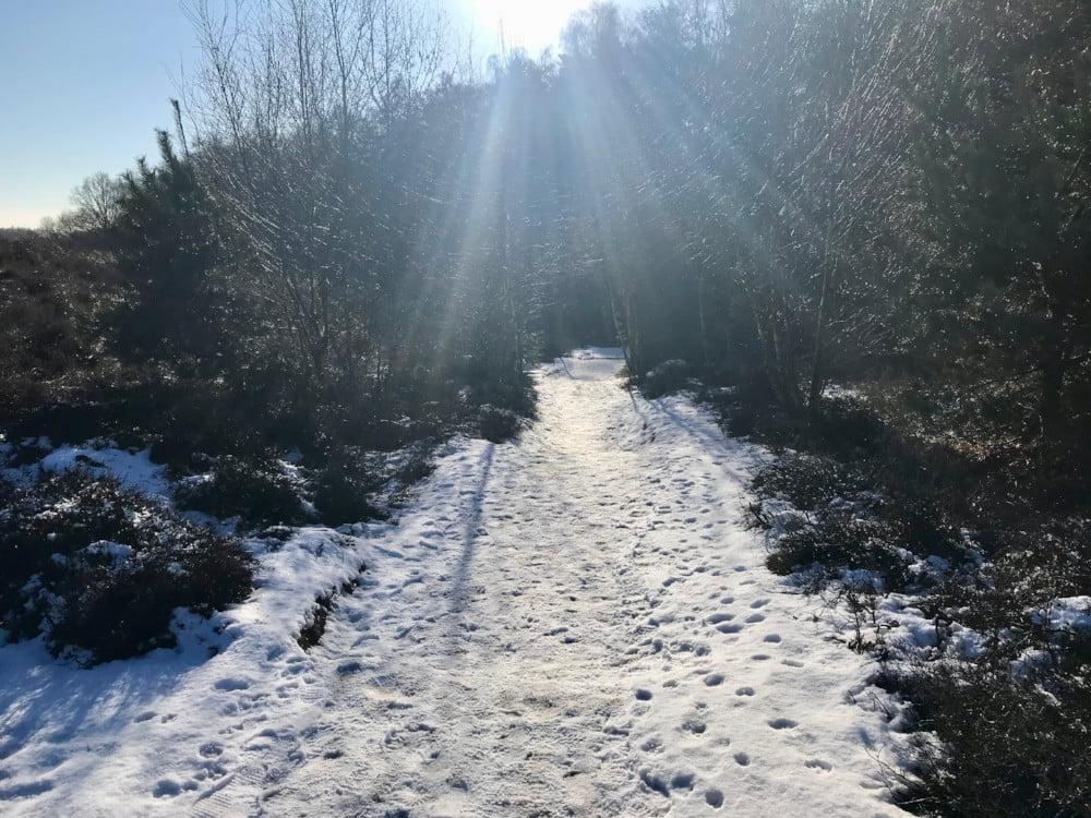 Besneeuwd pad bij de Veluwezoom-Posbank