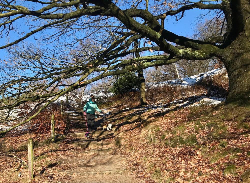 Met de honden wandelen bij de Veluwezoom-Posbank