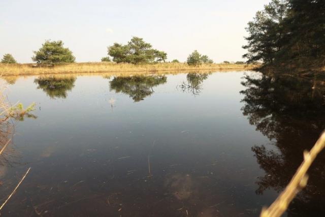 Water in natuurgebied De Plateaux - Hageven