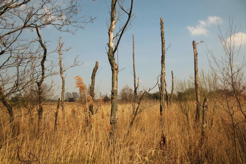 Wandelen met de hond in natuurgebied de Plateaux - Hageven