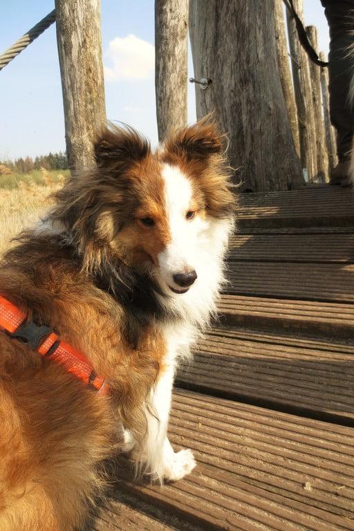 heltie Filou van OutDoor - Waarom met hond alles twee keer zo leuk is!