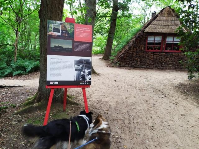 Honden in Veenpark