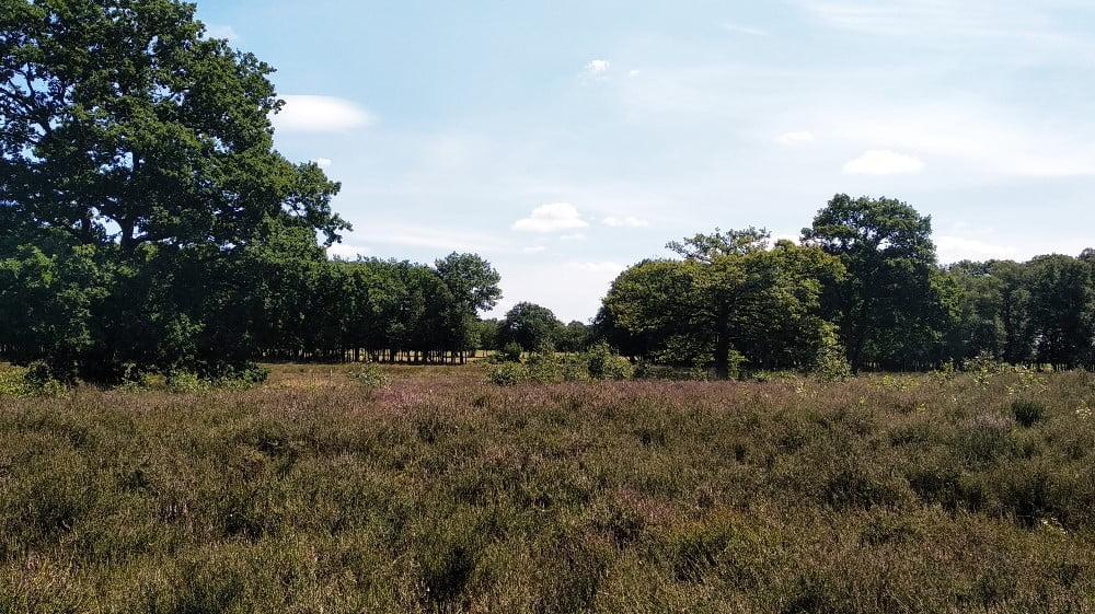 Heide bij Oudemolense Diep