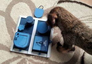 Teckel speelt Trixie hondenpuzzel