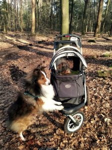 Sheltie en teckel in het bos